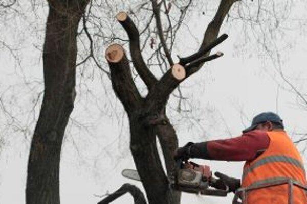 Podnikateľka, ktorá má od mesta v prenájme svätokrížsky park, požiadala o povolenie na výrub niekoľkých drevín.