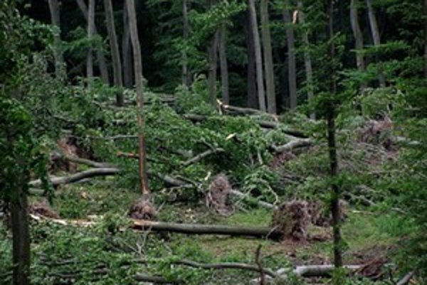 Drevo z vyvrátených stromov pomôže zachovať stojace stromy, ktoré by sa museli pre plánovanú ťažbu vyrúbať.