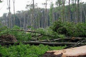 Kalamita v bratislavskom lesoparku sa stala v polovici  mája po výdatných dažďoch.