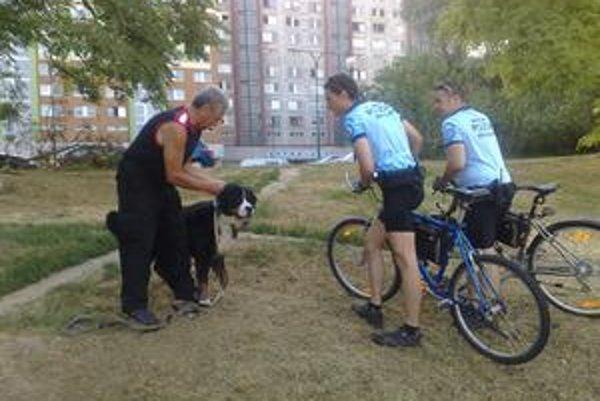 V Petržalke evidujú asi päťtisíc psov, v skutočnosti ich však môže byť aj raz toľko. Prihlásený pes musí mať registračnú známku.