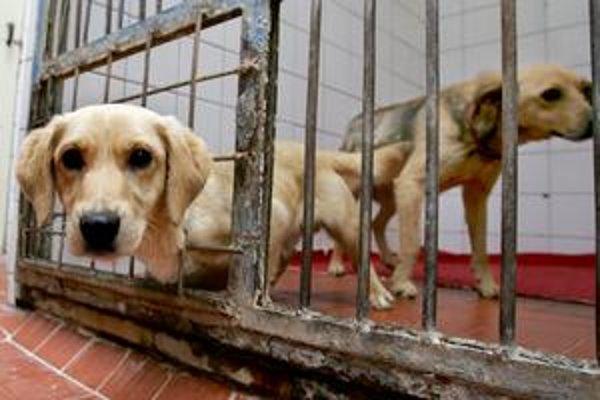 Psy z bratislavského útulku  na Poliankach. Osvojenie sa dá urobiť aj na počkanie.