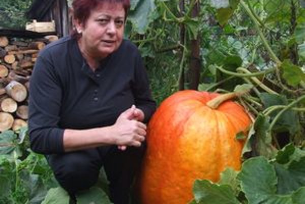 V záhrade Oľgy Chmúrovej narástla obrovská tekvica.