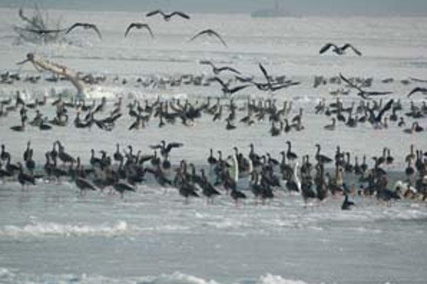 Hrušovská zdrž je známe zimovisko vodného vtáctva na Slovensku i v strednej Európe. Nachádza sa pri Čunove.