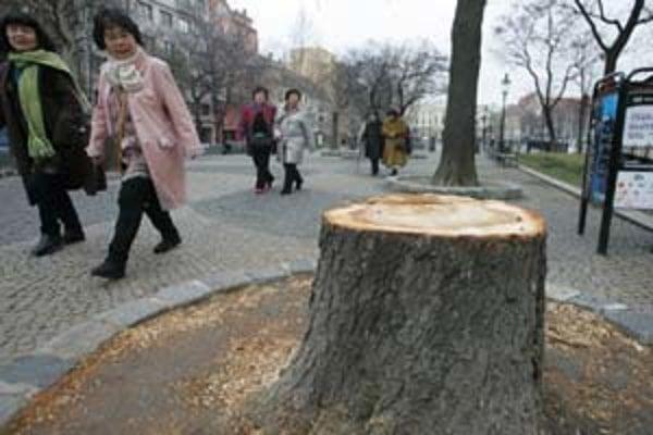 Pagaštan na Hviezdoslavovom dalo vyrúbať Staré Mesto v pondelok. Do konca januára majú vyťať ešte ďalších deväť chorých alebo nebezpečných stromov.