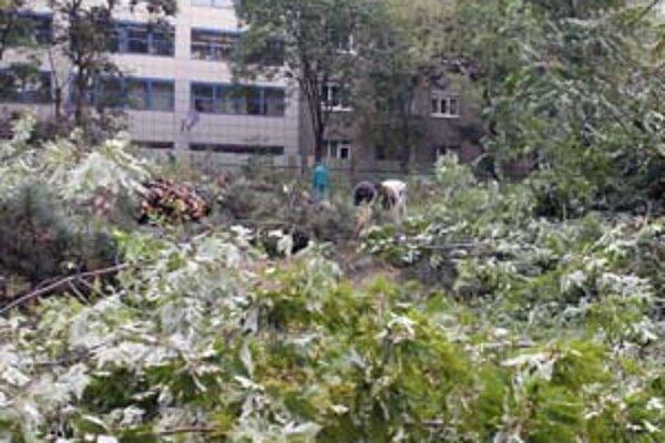 Stromy z parku vyrúbali bez povolenia. Investora sa zatiaľ podarilo zastaviť .