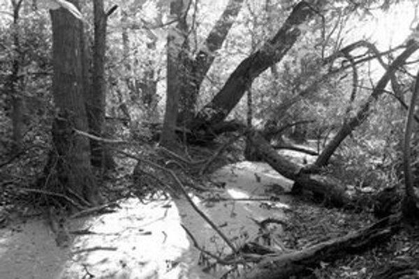 Odvodnenie Šúru počas druhej svetovej vojny zapríčinilo doteraz vyhynutie asi 33 druhov rastlín a 20 druhov živočíchov.