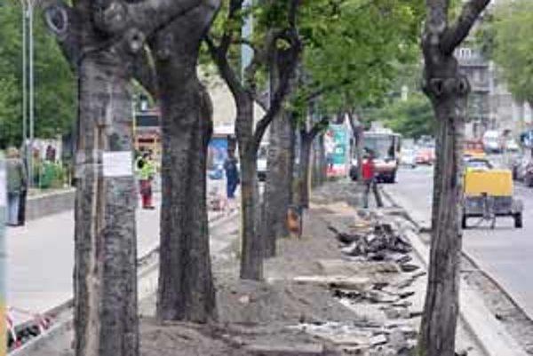 Osekané korene stromov, ktoré boli minulý týždeň obnažené, v piatok zasypali.