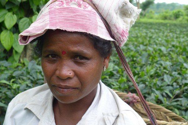 Zbieranie čajových lístkov je v Assame práca pre ženy.