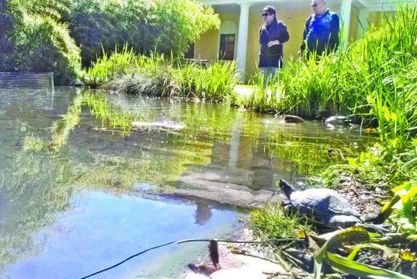 Korytnačky návštevníci obdivujú, no pre tamojšiu faunu a flóru sú podľa veterinára pohromou.