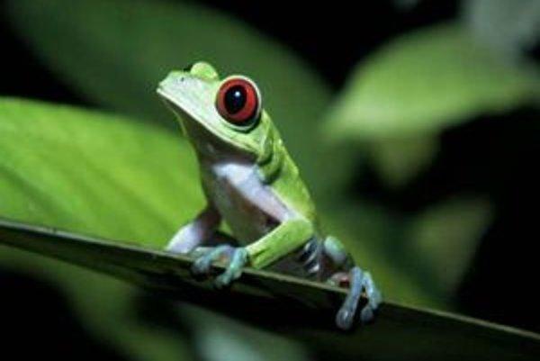 V brazílskych lesoch žijú mnohé ohrozené druhy živočíchov.