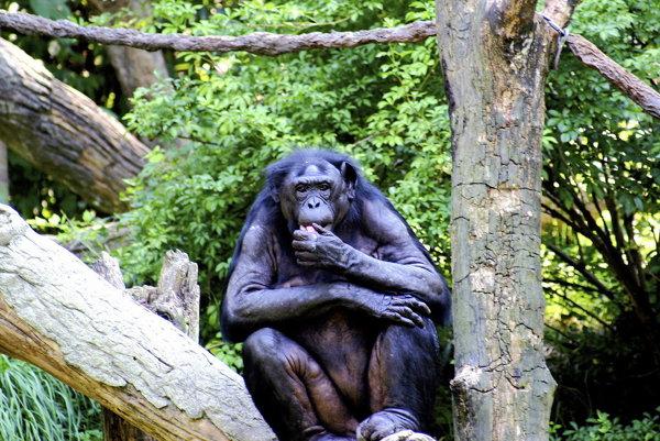 Ak sa chcú primáty zbaviť parazitov, zožerú drsné nepožuté listy.