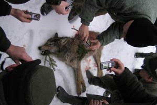 Ak by sa vlčica v čase lovu nachádzala na poľskej strane, nič by sa jej nestalo. Slovenskí poľovníci si svoj víťazný moment nad zvieraťom zväčnili.