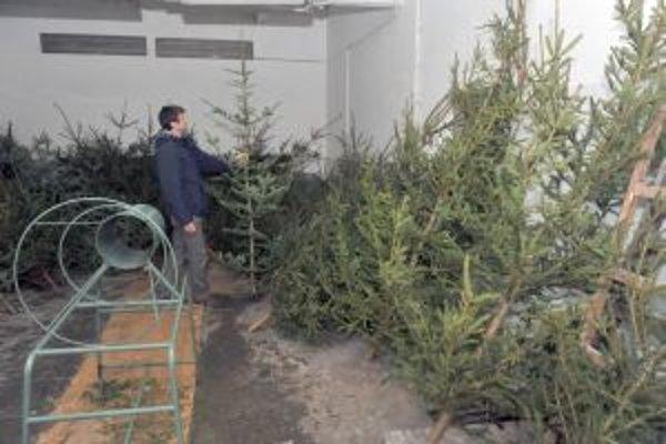 Stromčeky po Vianociach poslúžia na výrobu tepla.