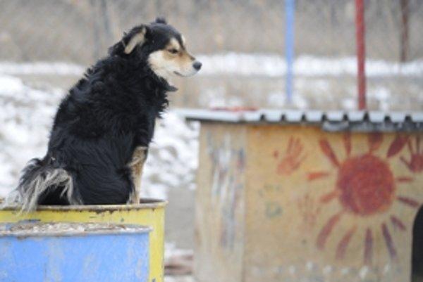 V obci Častkov sa psy bez majiteľa začínajú objavovať nejaký čas po letných prázdninách.