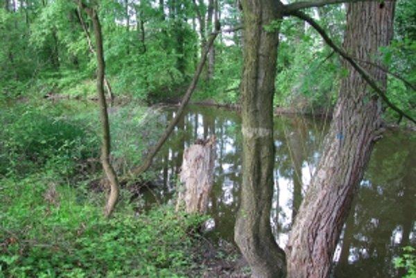 Kátovská časť lužného lesa je pretkaná vodnými ramenami.