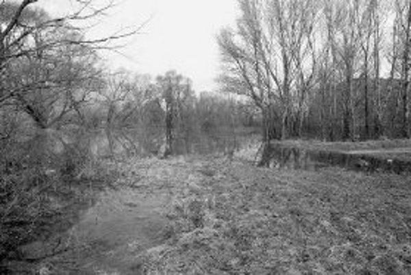 Mútna voda rieky Morava je takmer bez života. FOTO SME - MIRKA CIBULKOVÁ