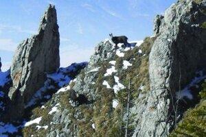 Kamzíky žijú vysoko v horách.