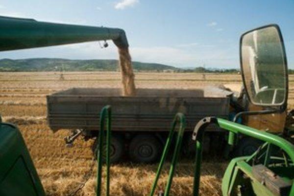 Pšenica vyniesla málo.