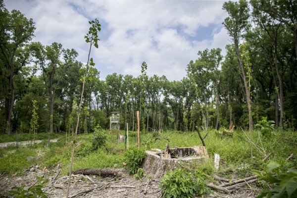 Ťažba dreva sa stretla s kritikou ochranárov a verejnosti.