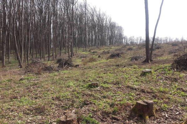 Lučenský les
