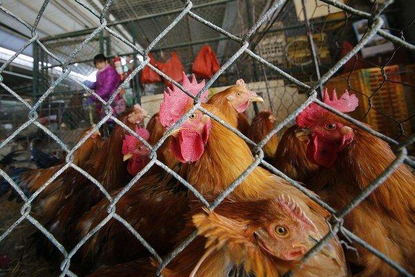 Zákulisie biznisu s kuracím mäsom nie je lákavé.