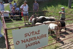 O titul miss jahňa súťažilo osem ovečiek.