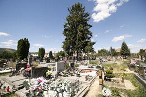 Približne šesťdesiatročný smrek je už pre cintorín hrozbou.