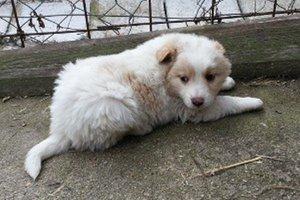 Nový domov hľadá aj šteniatko Ranny.