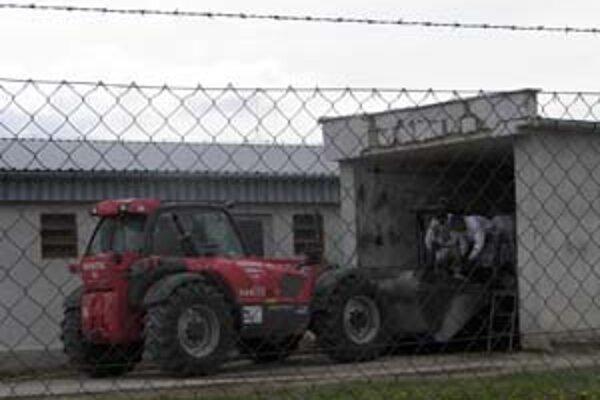 Ošípané nakazené morom v Dolných Semerovciach a Jesenskom boli už zlikvidované, vyšetrovanie zavlečenia nákazy pokračuje.