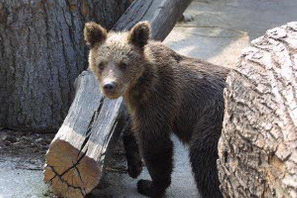Vladimír Slobodník bude v RKC v Prievidzi 11. 3. o 16.30 h hovoriť o medveďoch.