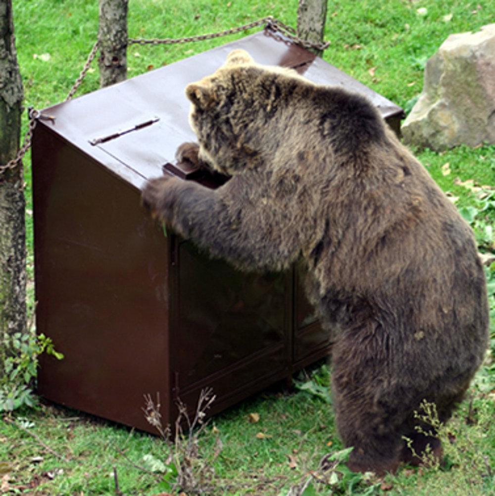 Prototyp nedobytného kontajneru testovali aj na medveďoch v košickej ZOO.Kontajner je navrhnutý tak, aby sa dal upevniť do zeme, čo je dôležité, aby ho medveď nemohol prevrátiť.