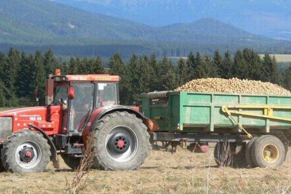 lováci sa pozerajú na ceny a kupujú o pár centov lacnejšie zemiaky z dovozu, najmä z Poľska a Českej republiky.