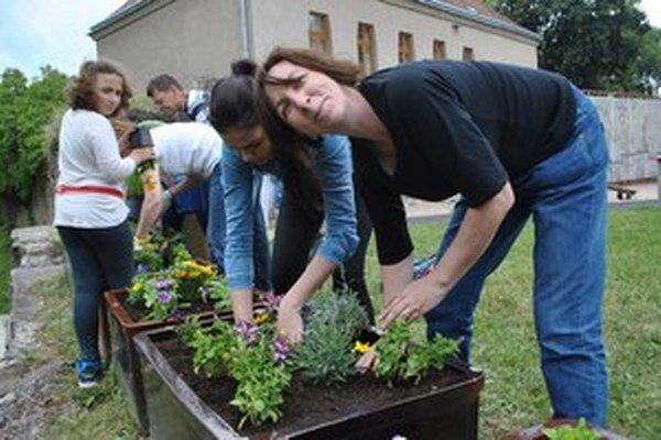 Hrádočania su adoptovali 49 opustených kvetináčov.