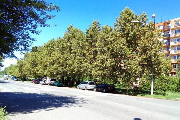Napadnuté stromy na Ul. P. O. Hviezdoslava.