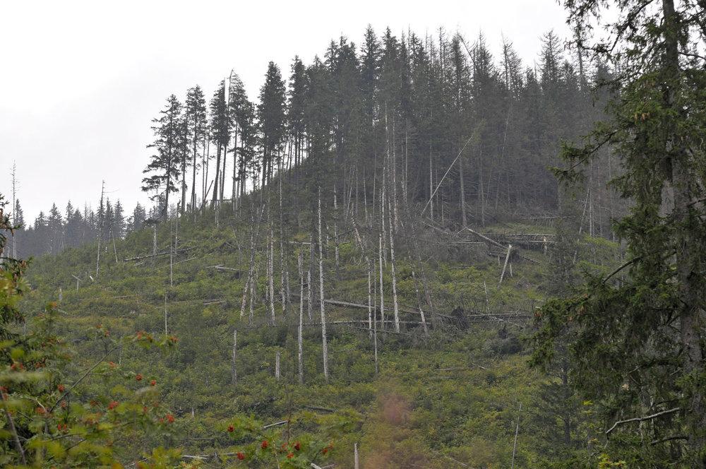 Pohľad na oblasť v Bielovodskej doline zasiahnutú lykožrútom počas pozemnej prehliadky území vo Vysokých Tatrách napadnutých lykožrútom. Snímka je z 30.augusta 2016