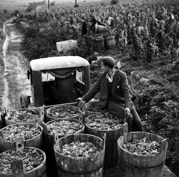Oberačka v Malých Karpatoch v roku 1950