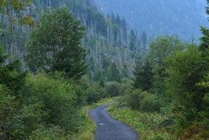 Pohľad do Tichej doliny po dvanástich rokoch od ničivej víchrice.