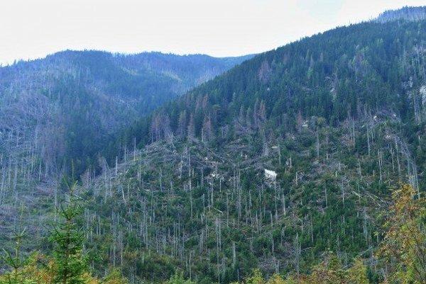 Na snímke pohľad na polom, v ktorom vyrastá nový les v Tichej doline po dvanástich rokoch od ničivej víchrice vo Vysokých Tatrách.