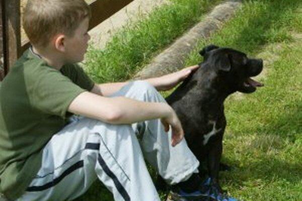 Daň za psa sa v Prievidzi zvyšuje o tri eurá.