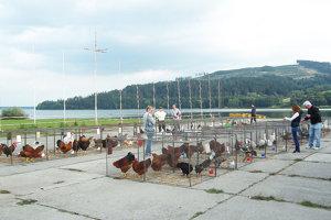 Na sklonku septembra si výstava drobných zvierat zaknihovala 21. ročník.