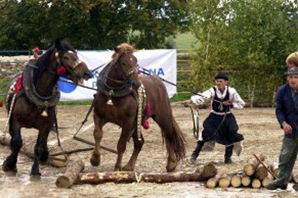 Furmani S koňmi absolvujú v Mačove niekoľko súťažných disciplín.