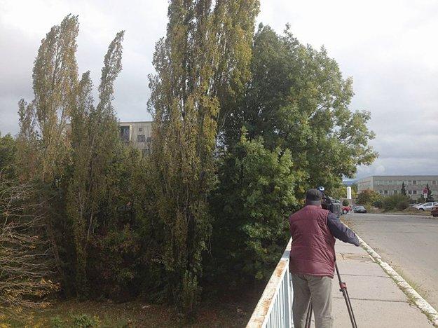 Aj tieto stromy majú padnúť kvôli dopravnému napojeniu Novej Terasy na Tr. SNP