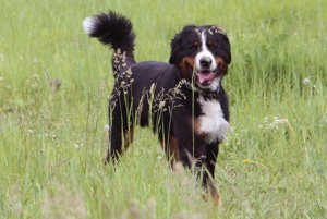 Majitelia môžu svojich psov vodiť na sídlisku Píly na nový výbeh.