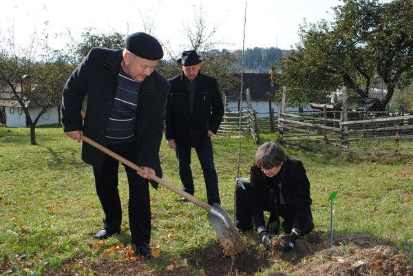 """Sadenie jablone. Ján Horvát (s lopatou), Vasil Fedič a Narcyz Piórecki. Jablonke podľa starého rusínskeho zvyku """"pošepkali do ucha"""" želanie."""