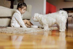 Domov alergika sa zaobíde aj bez zvierat a kobercov.