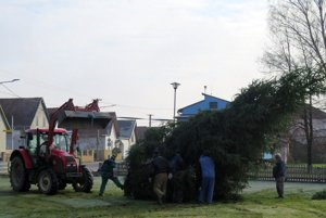 Chlapi pri stavaní stromčeka.