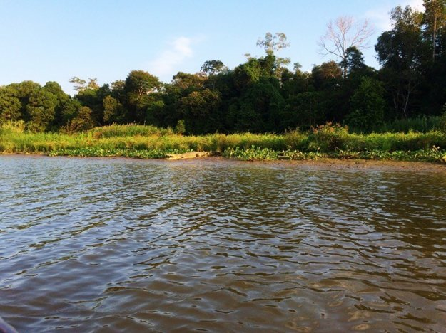 Rieka Kinabatangan