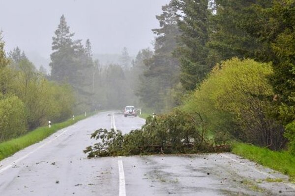 Strom zranil mladého muža.