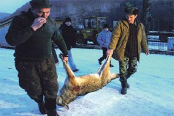 Tento vlk útočil na vysokú v dedine.