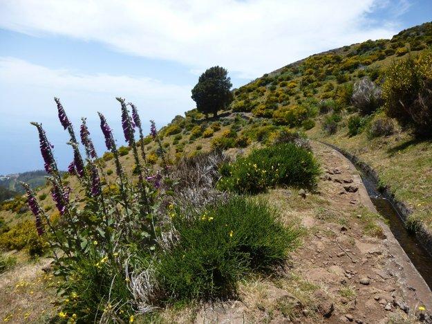 Na Madeire nájdete mnoho turistických trás, od ľahkých až po náročnú turistiku.